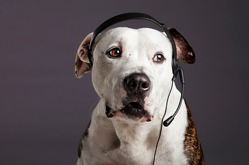 service-contact-dog